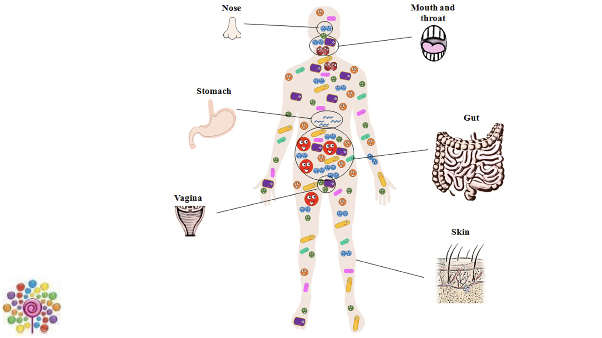 Microorganisms colonise all over and inside the human body.