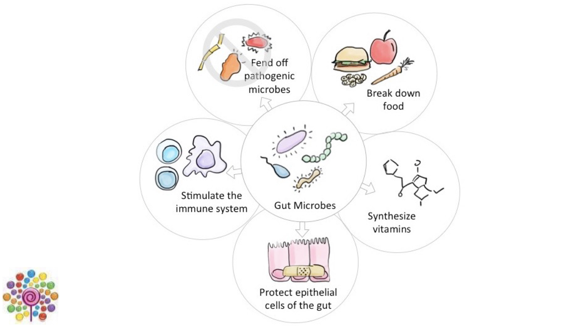 Some of the benefits of probiotics to health.